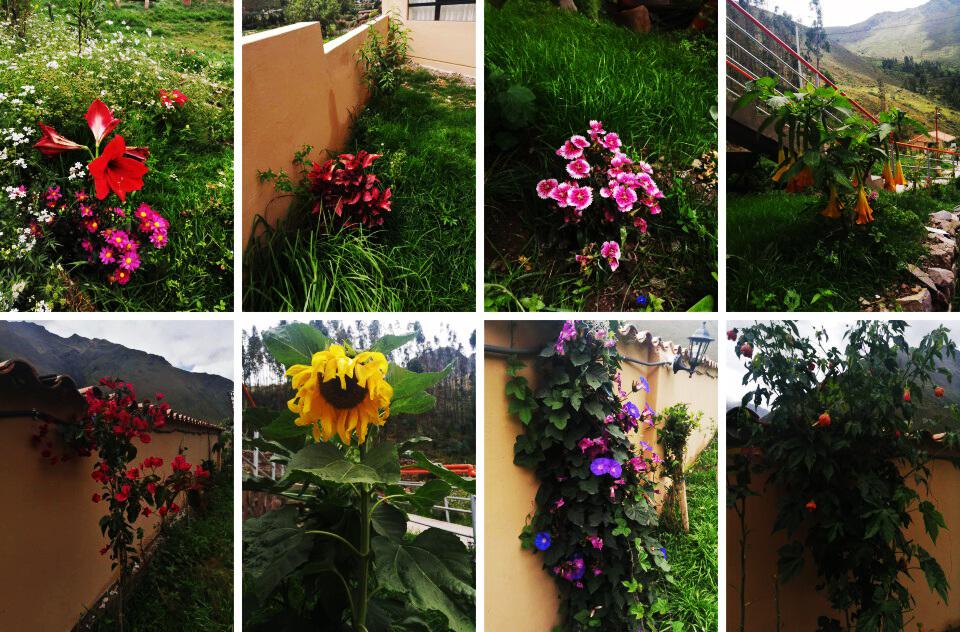 Native Flower Garden in hotel in ollantaytambo